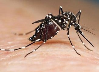 plan contra el mosquito tigre en el ayuntamiento de Valencia