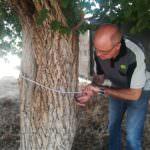 Tecnica recomendable para proccesionaria del pino