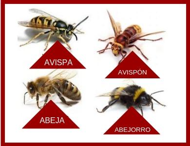 avispas, abejas, abejorros