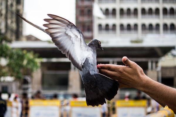 mano dando de comer una paloma