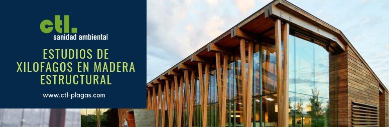 estudios de xilófagos en madera estructural