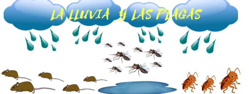 ¿Cómo afecta la DANA y las lluvias torrenciales a las plagas?