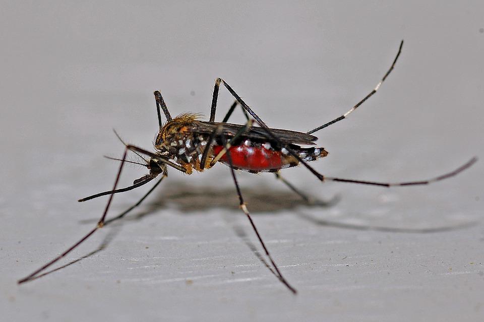 Nueva campaña preventiva contra el mosquito ante las nuevas lluvias.