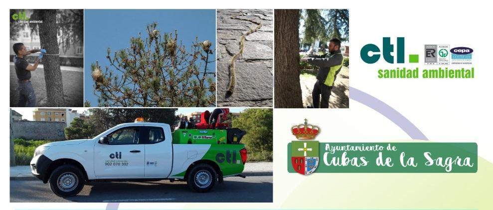 CTL comienza la Campaña de la Procesionaria del pino a través de endoterapia en Cubas de la Sagra.