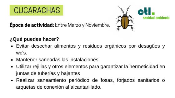 la cucaracha es una de las plagas más extendidas en los hogares.