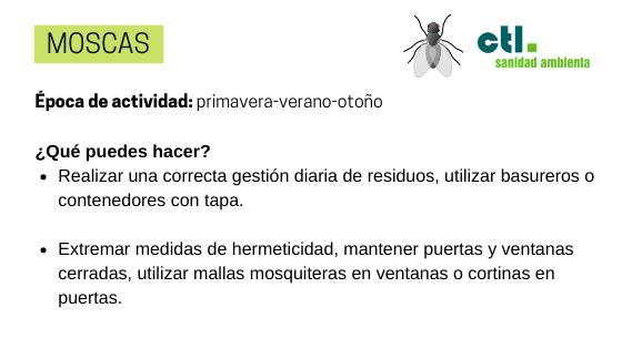 las moscas son un tipo de plagas muy frecuentes en el hogar.