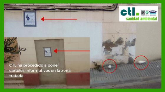 palomas y otras plagas en los barrios