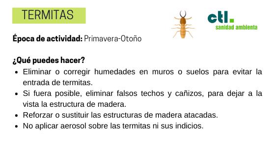 como combatir la plaga de termitas en el hogar
