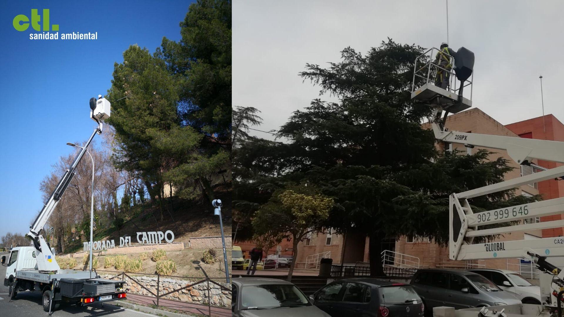 El ayuntamiento de Mejorada del Campo combate la procesionaria.