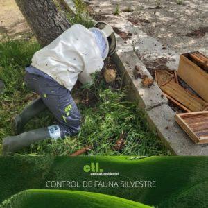 control de fauna silvestre