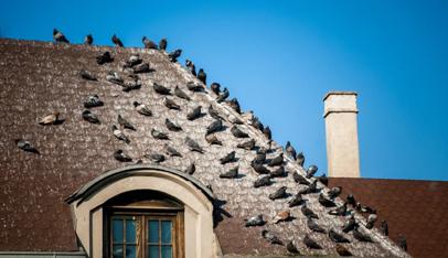 nidos de cotorras en la ciudad